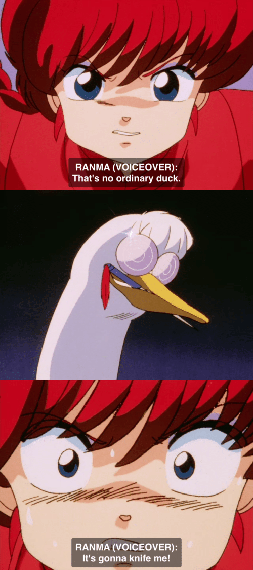 Duck, Ranma, and Knife: RANMA (VOICEOVER):  That's no ordinary duck.   RANMA (VOICEOVER):  It's gonna knife me!