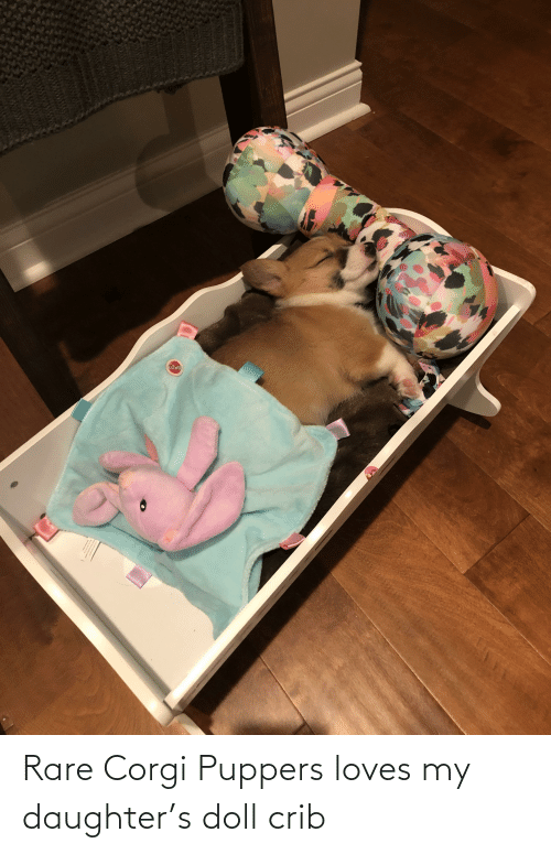 my daughter: Rare Corgi Puppers loves my daughter's doll crib