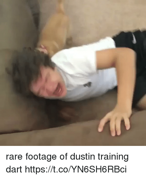 Girl Memes, Rare, and Dart: rare footage of dustin training dart https://t.co/YN6SH6RBci