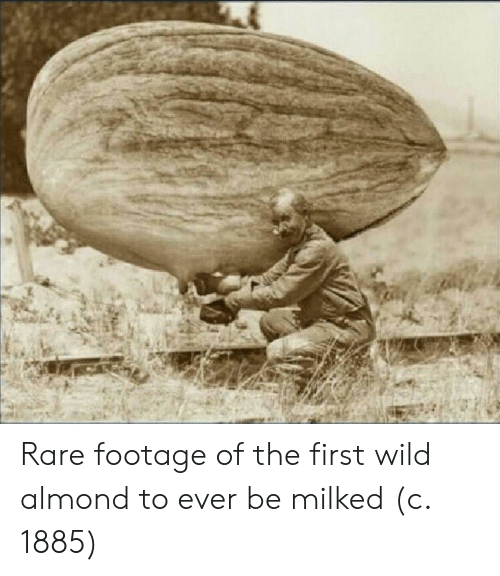 rare footage: Rare footage of the first wild almond to ever be milked (c. 1885)