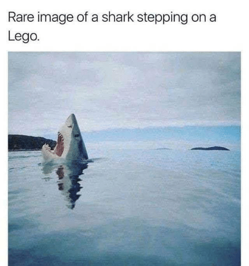 Lego, Shark, and Image: Rare image of a shark stepping  Lego.