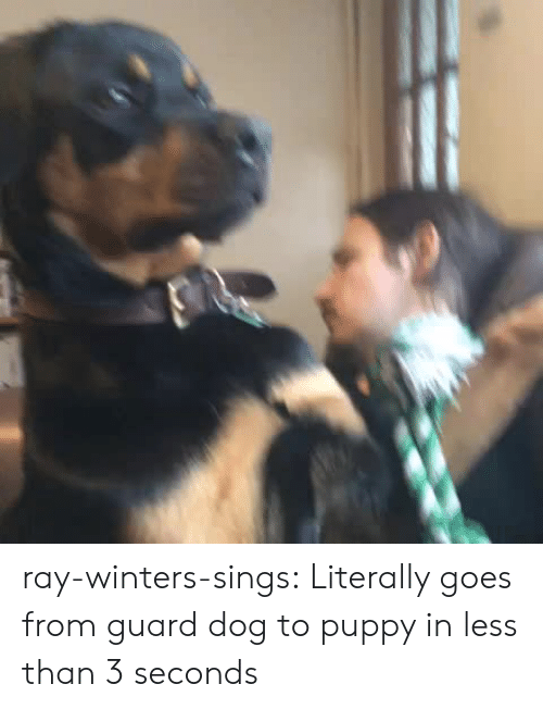 Tumblr, Blog, and Http: ray-winters-sings:  Literally goes from guard dog to puppy in less than 3 seconds