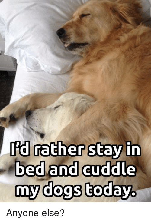 Dogs, Memes, and Today: Rd rather stay in  bed and auddle  my dogs today. Anyone else?