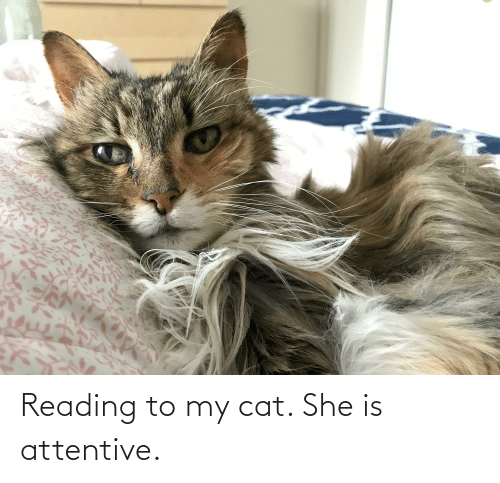 attentive: Reading to my cat. She is attentive.