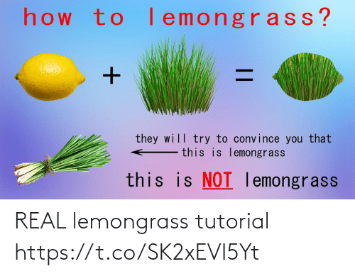 real: REAL lemongrass tutorial https://t.co/SK2xEVI5Yt