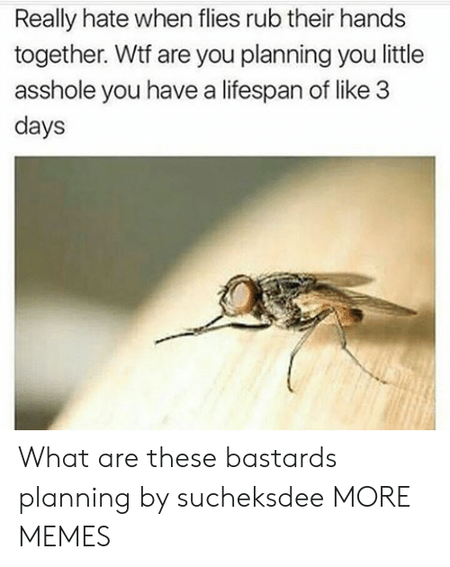 Dank, Memes, and Target: Really hate when flies rub their hands  together. Wtf are you planning you little  asshole you have a lifespan of like 3  days What are these bastards planning by sucheksdee MORE MEMES