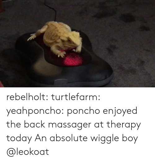 poncho: rebelholt:  turtlefarm:  yeahponcho: poncho enjoyed the back massager at therapy today  An absolute wiggle boy   @leokoat