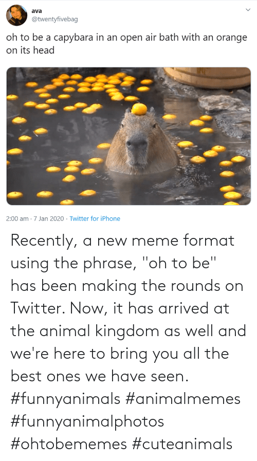 "arrived: Recently, a new meme format using the phrase, ""oh to be"" has been making the rounds on Twitter. Now, it has arrived at the animal kingdom as well and we're here to bring you all the best ones we have seen. #funnyanimals #animalmemes #funnyanimalphotos #ohtobememes #cuteanimals"