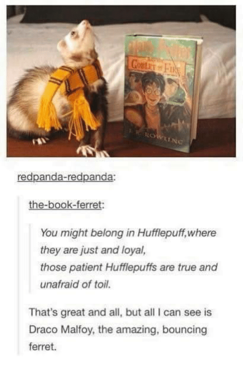 Bounc: red panda-redpanda:  the-book-ferret:  You might belong in Hufflepuff, where  they are just and loyal,  those patient Hufflepuffs are true and  unafraid of toil.  That's great and all, but all can see is  Draco Malfoy, the amazing, bouncing  ferret.