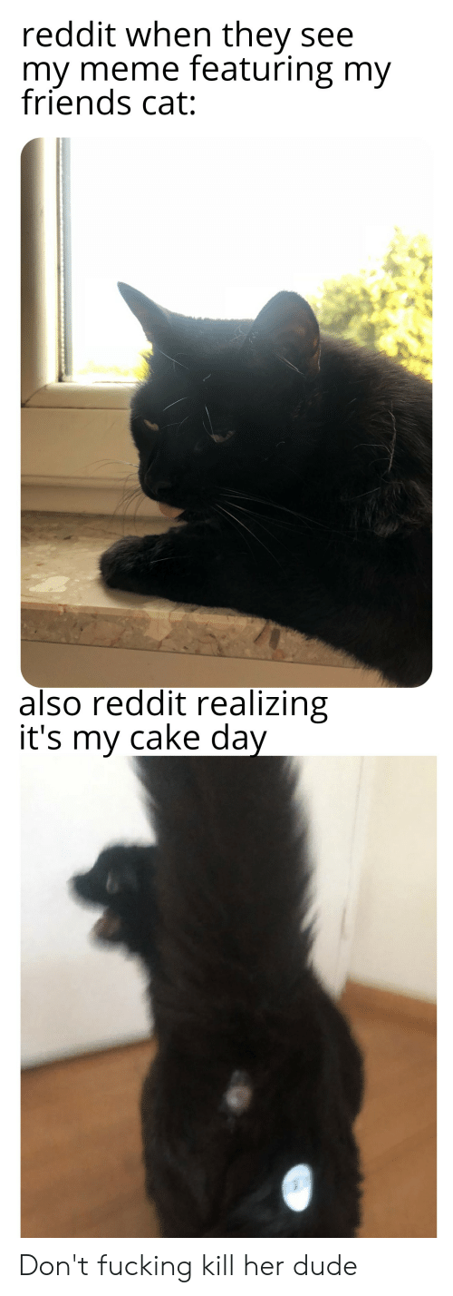 Dude, Friends, and Meme: reddit when they see  my meme featuring my  friends cat:  also reddit realizing  it's my cake day Don't fucking kill her dude