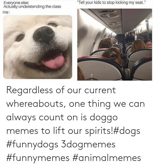 lift: Regardless of our current whereabouts, one thing we can always count on is doggo memes to lift our spirits!#dogs #funnydogs 3dogmemes #funnymemes #animalmemes