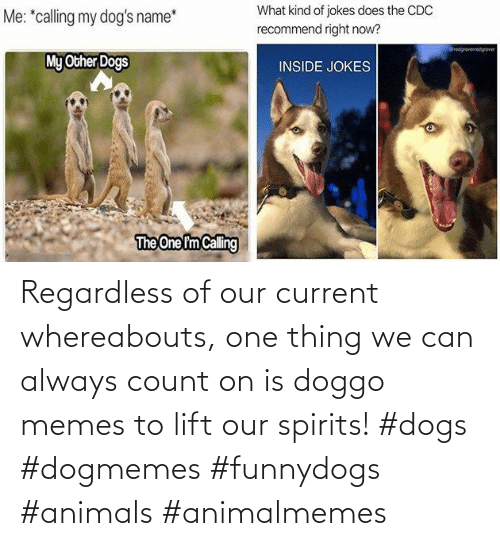 Dogs: Regardless of our current whereabouts, one thing we can always count on is doggo memes to lift our spirits! #dogs #dogmemes #funnydogs #animals #animalmemes