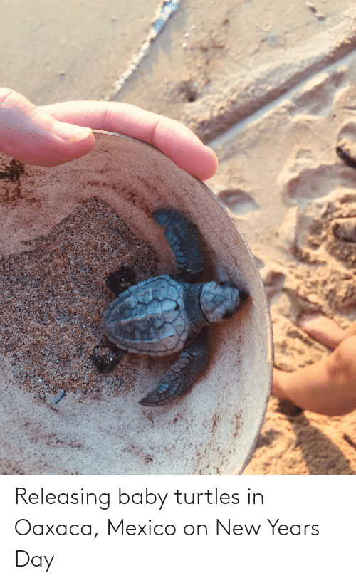 turtles: Releasing baby turtles in Oaxaca, Mexico on New Years Day