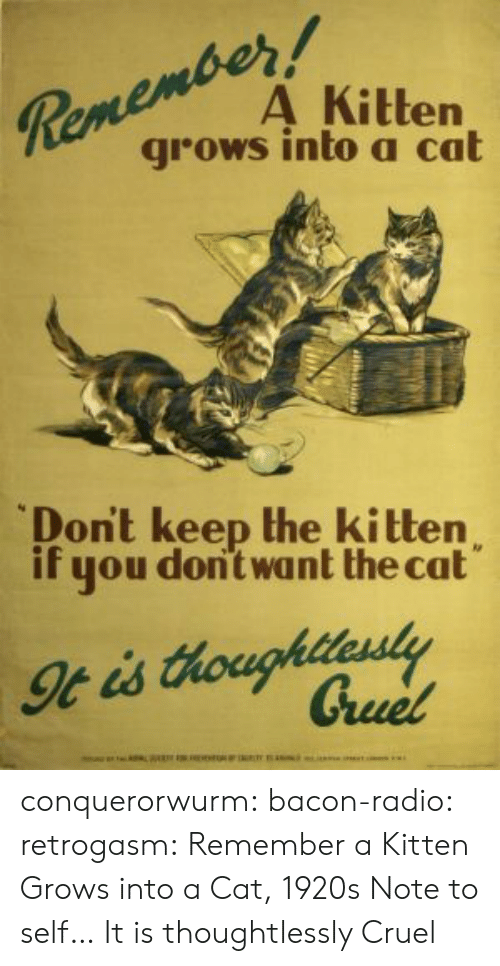 Radio, Tumblr, and Blog: RemeA Kitten  grows into a cat  Dont keep the kitten  if you dont want the cat conquerorwurm: bacon-radio:  retrogasm:  Remember a Kitten Grows into a Cat, 1920s  Note to self…  It is thoughtlessly Cruel