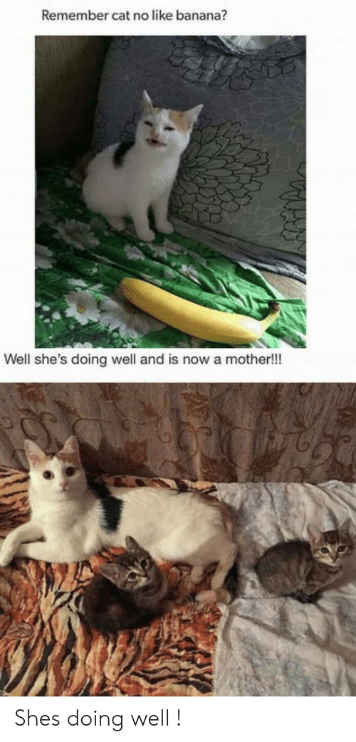 Banana, Cat, and Mother: Remember cat no like banana?  Well she's doing well and is now a mother!!! Shes doing well !