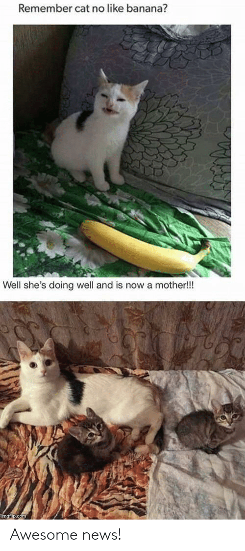 News, Banana, and Awesome: Remember cat no like banana?  Well she's doing well and is now a mother!!! Awesome news!