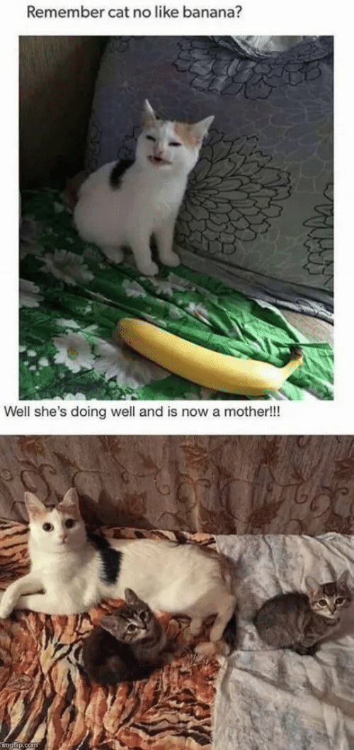 doing well: Remember cat no like banana?  Well she's doing well and is now a mother!!
