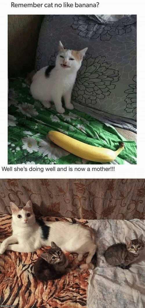 doing well: Remember cat no like banana?  Well she's doing well and is now a mother!!!
