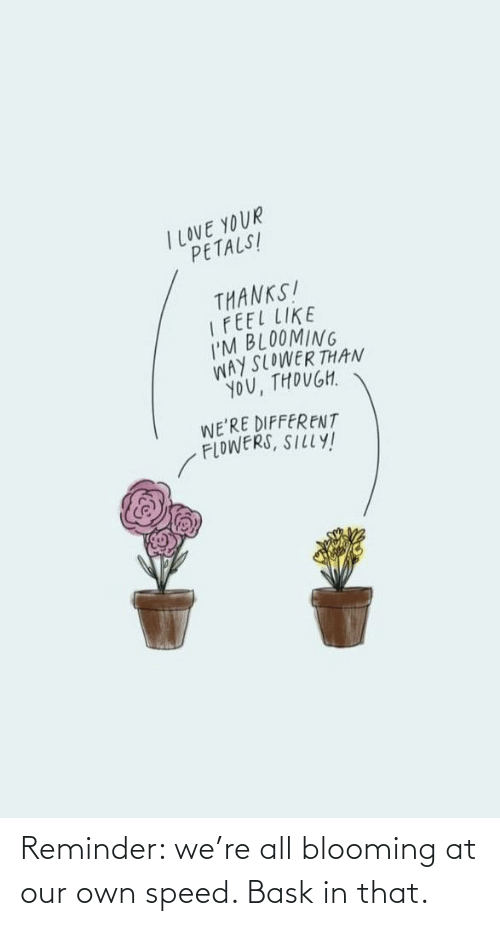 reminder: Reminder: we're all blooming at our own speed. Bask in that.