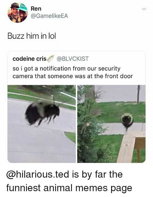 Memes, Ted, and Animal: Ren  2v.y @GamelikeEA  Buzz him in lo  codeine cris @BLVCKIST  so i got a notification from our security  camera that someone was at the front door @hilarious.ted is by far the funniest animal memes page