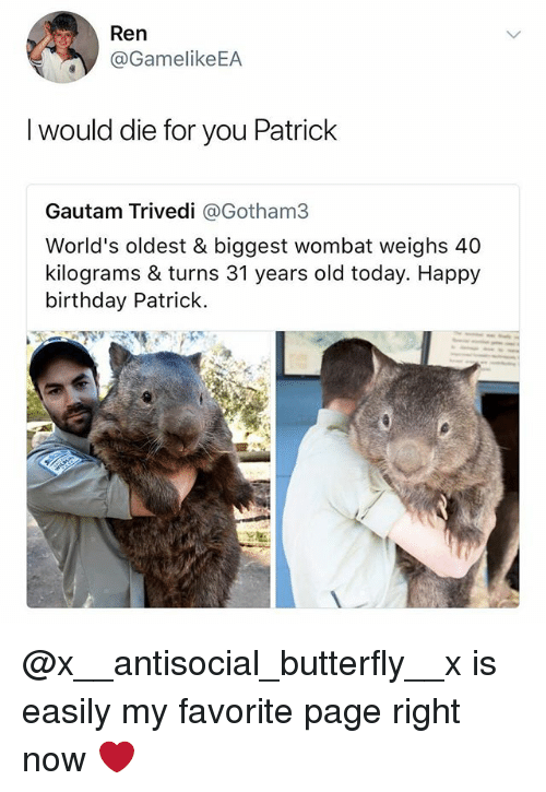 Birthday, Happy Birthday, and Butterfly: Ren  @GamelikeEA  I would die for you Patrick  Gautam Trivedi @Gotham3  World's oldest & biggest wombat weighs 40  kilograms & turns 31 years old today. Happy  birthday Patrick @x__antisocial_butterfly__x is easily my favorite page right now ❤️