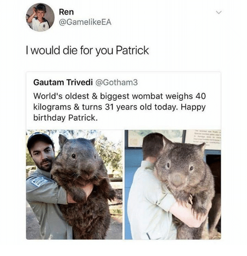 Birthday, Dank, and Happy Birthday: Ren  @GamelikeEA  I would die for you Patrick  Gautam Trivedi @Gotham3  World's oldest & biggest wombat weighs 40  kilograms & turns 31 years old today. Happy  birthday Patrick.