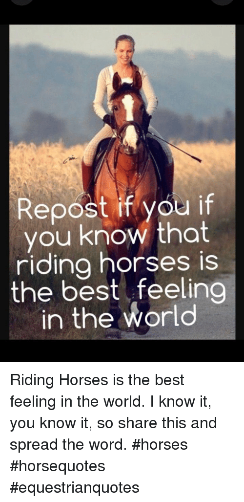 Horses, Best, and Word: Repost if you if  you know that  riding horses is  the best feeling  in the world Riding Horses is the best feeling in the world. I know it, you know it, so share this and spread the word. #horses #horsequotes #equestrianquotes