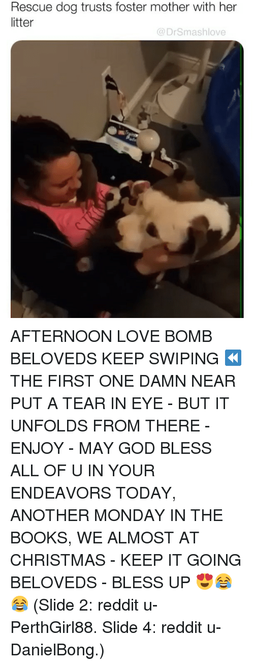 Bless Up, Books, and Christmas: Rescue dog trusts foster mother with her  litter  @DrSmashlove AFTERNOON LOVE BOMB BELOVEDS KEEP SWIPING ⏪ THE FIRST ONE DAMN NEAR PUT A TEAR IN EYE - BUT IT UNFOLDS FROM THERE - ENJOY - MAY GOD BLESS ALL OF U IN YOUR ENDEAVORS TODAY, ANOTHER MONDAY IN THE BOOKS, WE ALMOST AT CHRISTMAS - KEEP IT GOING BELOVEDS - BLESS UP 😍😂😂 (Slide 2: reddit u-PerthGirl88. Slide 4: reddit u-DanielBong.)