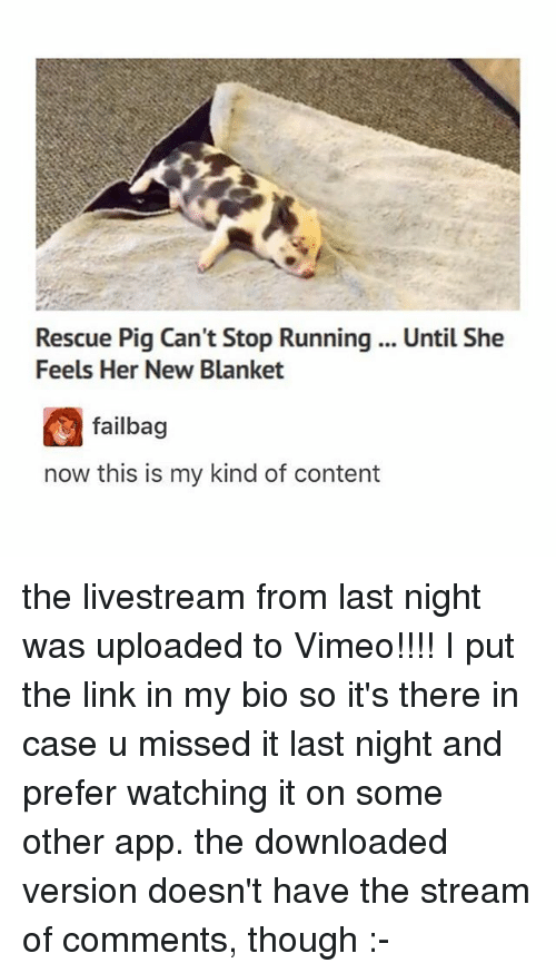 vimeo: Rescue Pig Can't Stop Running .. Until She  Feels Her New Blanket  failbag  now this is my kind of content the livestream from last night was uploaded to Vimeo!!!! I put the link in my bio so it's there in case u missed it last night and prefer watching it on some other app. the downloaded version doesn't have the stream of comments, though :-