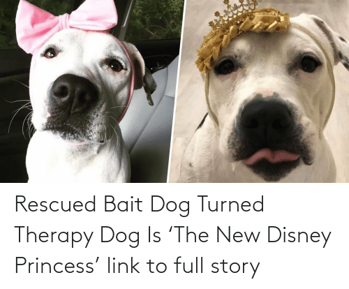 Princess:   Rescued Bait Dog Turned Therapy Dog Is 'The New Disney Princess'  link to full story