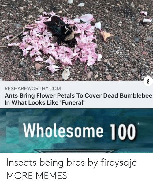 Cover: RESHAREWORTHY COM  Ants Bring Flower Petals To Cover Dead Bumblebee  In What Looks Like 'Funeral  Wholesome 100 Insects being bros by fireysaje MORE MEMES