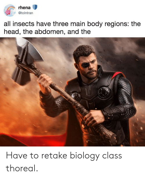 Dank, Head, and Biology: rhena  @tolntran  all insects have three main body regions: the  head, the abdomen, and the Have to retake biology class thoreal.