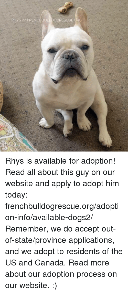 us-and-canada: RHYS FRENCHBULLDOGRESCUEORG Rhys is available for adoption! Read all about this guy on our website <location, likes, dislikes> and apply to adopt him today: frenchbulldogrescue.org/adoption-info/available-dogs2/  Remember, we do accept out-of-state/province applications, and we adopt to residents of the US and Canada. Read more about our adoption process on our website. :)
