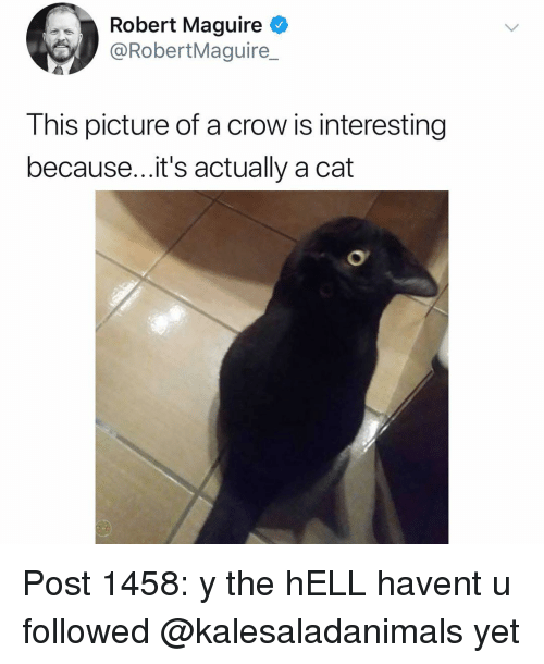 Maguire: Robert Maguire  @RobertMaguire  This picture of a crow is interesting  because...it's actually a cat Post 1458: y the hELL havent u followed @kalesaladanimals yet