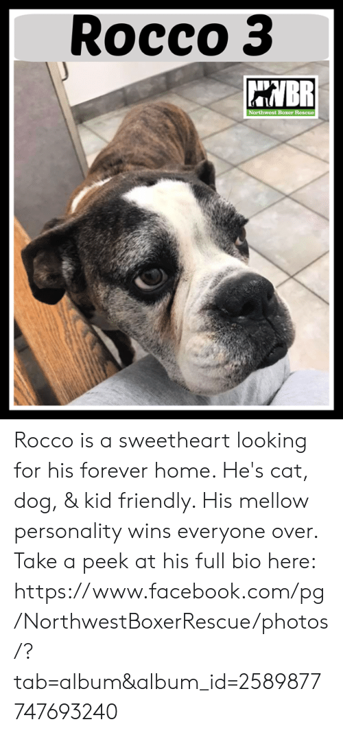 Facebook, Memes, and facebook.com: Rocco3 Rocco is a sweetheart looking for his forever home.  He's cat, dog, & kid friendly.  His mellow personality wins everyone over.  Take a peek at his full bio here:  https://www.facebook.com/pg/NorthwestBoxerRescue/photos/?tab=album&album_id=2589877747693240