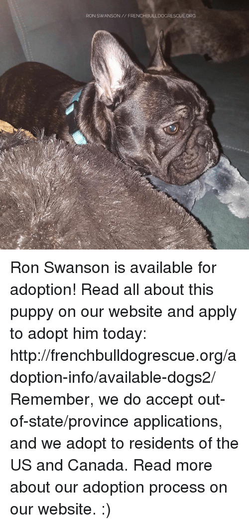 us-and-canada: RON SWANSON FRENCHBULLDOGRESCUE ORG Ron Swanson is available for adoption! Read all about this puppy on our website <location, likes, dislikes> and apply to adopt him today: http://frenchbulldogrescue.org/adoption-info/available-dogs2/  Remember, we do accept out-of-state/province applications, and we adopt to residents of the US and Canada. Read more about our adoption process on our website. :)