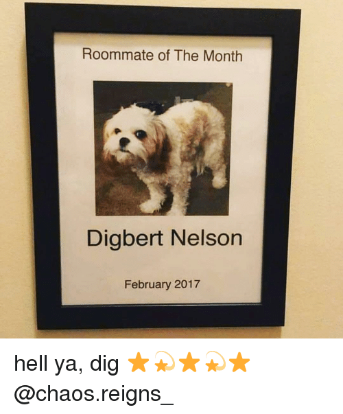 chaos reigns: Roommate of The Month  Digbert Nelson  February 2017 hell ya, dig ⭐️💫⭐️💫⭐️ @chaos.reigns_