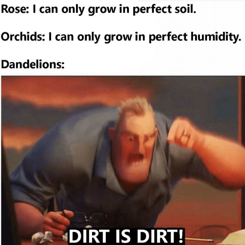 dirt: Rose: I can only grow in perfect soil.  Orchids: I can only grow in perfect humidity.  Dandelions:  DIRT IS DIRT!