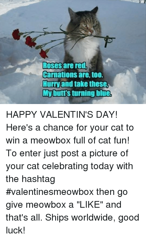 """happy valentine day: Roses are red,  Carnations are, too.  Hurry and take these  My buttsturning blue HAPPY VALENTIN'S DAY! Here's a chance for your cat to win a meowbox full of cat fun! To enter just post a picture of your cat celebrating today with the hashtag #valentinesmeowbox then go give meowbox a """"LIKE"""" and that's all. Ships worldwide, good luck!"""