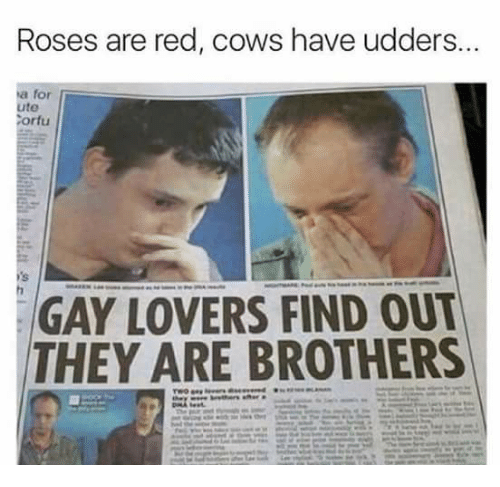 Memes, 🤖, and Cow: Roses are red, cows have udders...  ta for  ute  Corfu  GAY LOVERS FIND OUT  THEY ARE BROTHERS