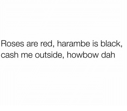 Harambism: Roses are red, harambe is black,  cash me outside, howbow dah