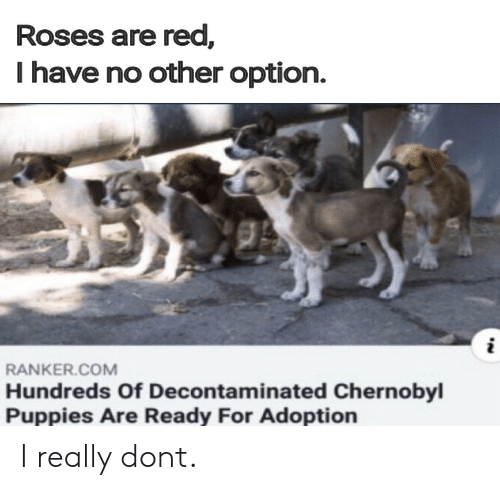 Puppies, Red, and Chernobyl: Roses are red,  I have no other option.  RANKER.COM  Hundreds Of Decontaminated Chernobyl  Puppies Are Ready For Adoption I really dont.