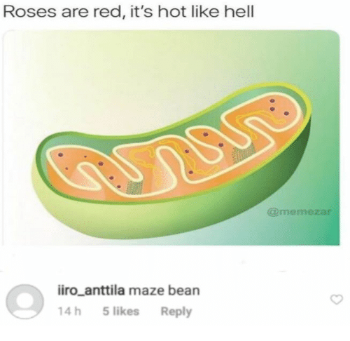 Hell, Red, and Roses: Roses are red, it's hot like hell  @memezar  iiro_anttila maze bean  14h 5likes Reply
