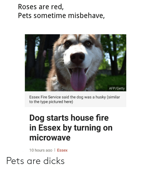 Fire, Pets, and House: Roses are red,  Pets sometime misbehave,  AFP/Getty  Essex Fire Service said the dog was a husky (similar  to the type pictured here)  Dog starts house fire  in Essex by turning on  microwave  10 hours ago Essex Pets are dicks