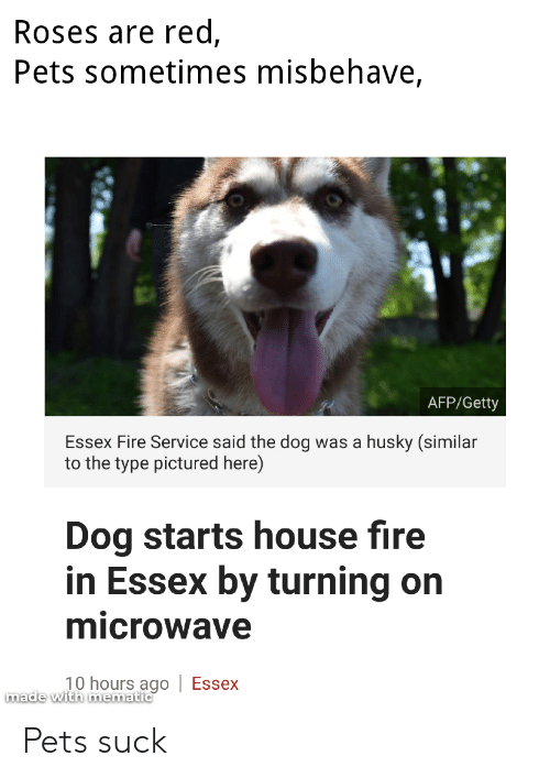 Fire, Pets, and House: Roses are red,  Pets sometimes misbehave,  AFP/Getty  Essex Fire Service said the dog was a husky (similar  to the type pictured here)  Dog starts house fire  in Essex by turning on  microwave  10 hours ago Essex  made with mematic Pets suck