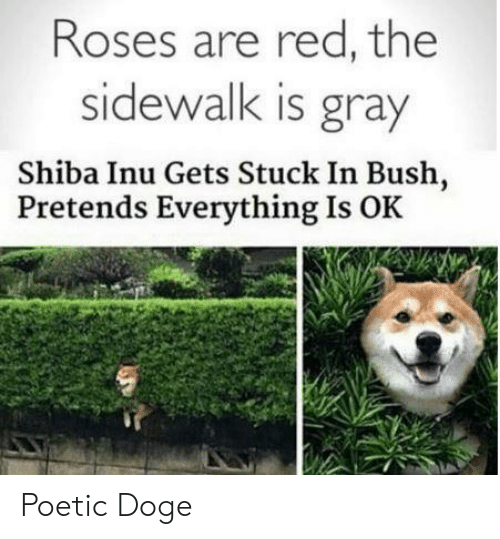Doge, Shiba Inu, and Poetic: Roses are red, the  sidewalk is gray  Shiba Inu Gets Stuck In Bush,  Pretends Everything Is OK   Poetic Doge