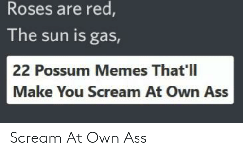 Ass, Memes, and Reddit: Roses are red,  The sun is gas,  22 Possum Memes That'll  Make You Scream At Own Ass Scream At Own Ass