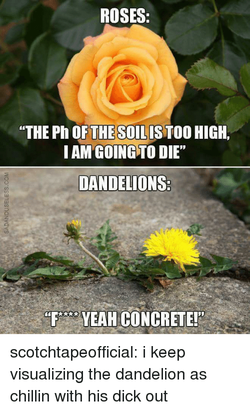 """F Yeah: ROSES:  """"THE Ph OFTHE SOILISTOO HIGH.  IAM GOING TO DIE""""  DANDELIONS  ED  F YEAH GONCRETE! scotchtapeofficial:  i keep visualizing the dandelion as chillin with his dick out"""