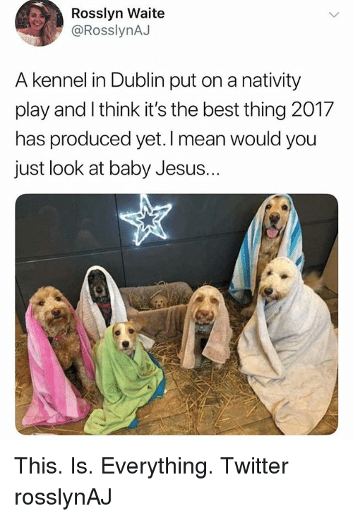 Jesus, Memes, and Twitter: Rosslyn Waite  @RosslynAJ  A kennel in Dublin put on a nativity  play and I think it's the best thing 2017  has produced yet. I mean would you  just look at baby Jesus. This. Is. Everything. Twitter rosslynAJ