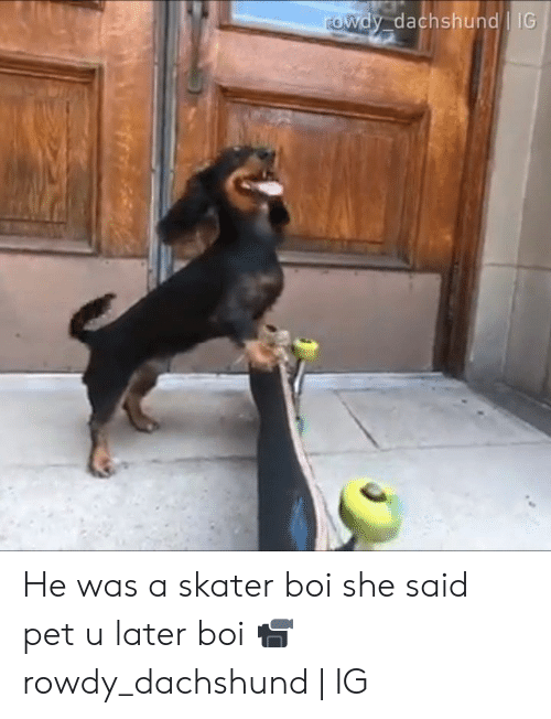 Dank, Rowdy, and 🤖: rowdy dachshund IG He was a skater boi she said pet u later boi  📹rowdy_dachshund | IG